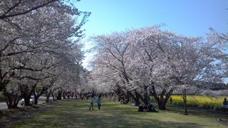 2012-04-04_15-32-55_141.jpg